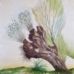 Weidenstumpf Hombroich 1989 Aquarell auf Bütten 20,5x22,5cm